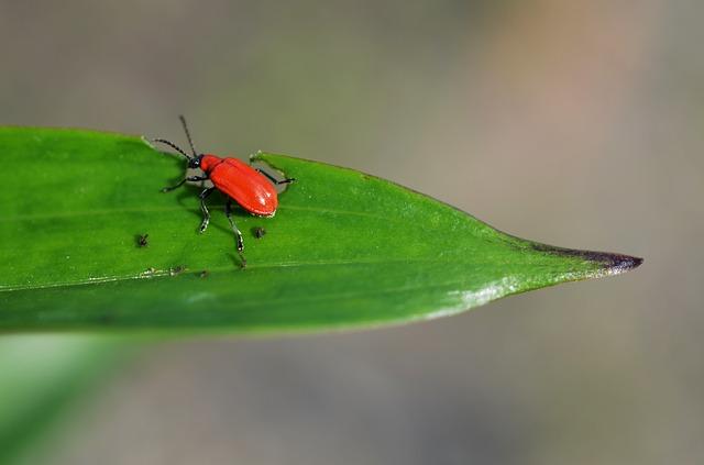 bugs-718753_640