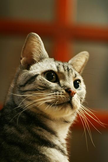 stamp_cat1