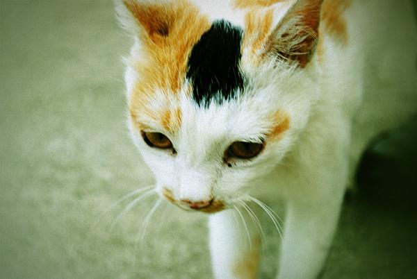 kansei_cat